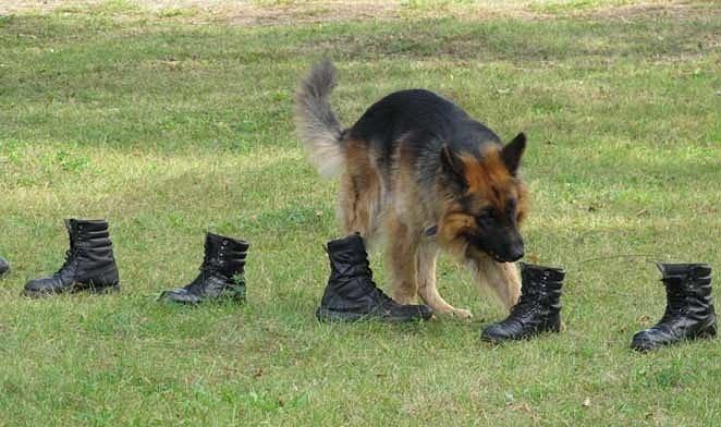 Картинки по запросу собака выборка