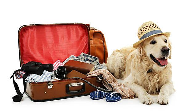 Royal Canin Medium купить с доставкой по СПб и ЛО